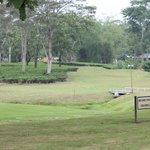 Golf course with Tea Garden