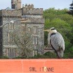 Bird I met down by the Harbour
