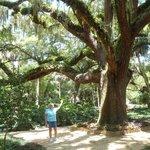 Aptly named, the Washington Oaks gardens