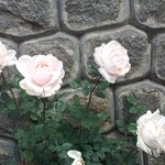 White roses near hotel lobby