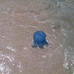 Beautiful Blue Medusa