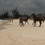 near bridgetown, horses from the barracks