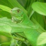 Green lizard perfectly mimetized