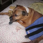 Smilita recovering from surgery.