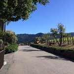 Mountain Winery path