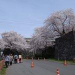 南門の桜は記念撮影の人が多い