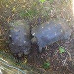 les tortues de l'hotel