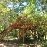 cabane de 27 m² dans un superbe chêne