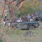 Capturing one of the areas many leopards on film