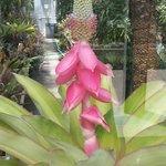 Blooming.....