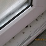 Patio doors dead insects