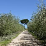 The Olive lined road leading to the Agriturismo