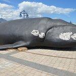Baleia:símbolo de Hermanus