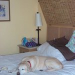 Pet-Friendly Rooms for our Lab, Max!