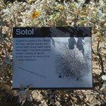 Sotol Info sign