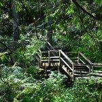 Trails around property