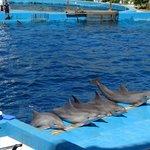 Show com os golfinhos