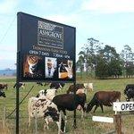 Ashgrove Tasmanian Farm Cheese