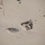 Come and leave your footprint in the sand