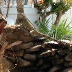 Pool area iguanas