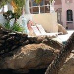Resident Iguanas