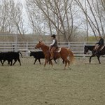 Team penning is harder than it looks!