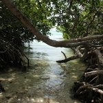 enter through the mangroves