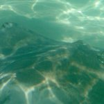 Beautiful Sting Rays