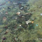 海中垃圾頗多