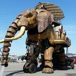 l'elephant