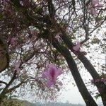 4月にドライブして来ました。桜もそろそろ終わり頃でしたが、とても整備された公園です。日本人なら是非とも訪れて欲しい場所です。