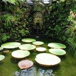 Райский сад по имени La Mortella