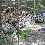 Leopard named Reno