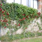 le rose del borgo