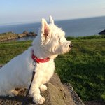 Westie looking South Westerly