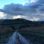 Take walks in the vineyards