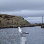 Seagull down at the wharf