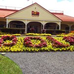 Dole Plantation - you must get the pineapple ice cream!