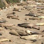 Praia de Piedras Blancas: Leões Marinhos