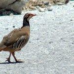 quail, via verdes de la Sierra