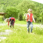 Flowers in May in Chianti