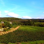 Vineyard in Chianti