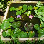 bassin devant la piscine