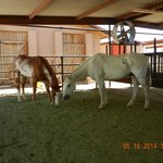 Horses well taken care of with shade and hay
