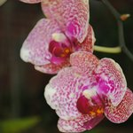 Some of the Orchids