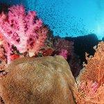 Phuket's Coral Reefs.