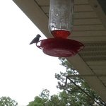 hummingbird enjoying the feeder