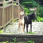 our dogs on the bridge across the river