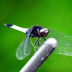 dragon fly at the pool