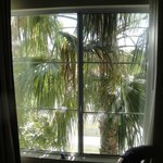 Window looking down to pool area blocked by palm tree.